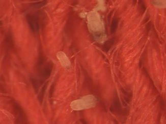 Biofunctional Proneem inhibits dust mites in textiles